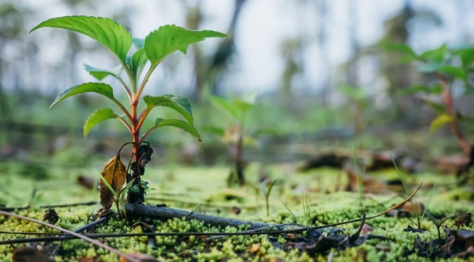 Why planting trees is so important?